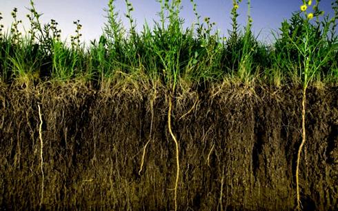 Зелені добрива, або сидерати, являють собою рослини, які вирощують для збагачення виснаженого ґрунту.
