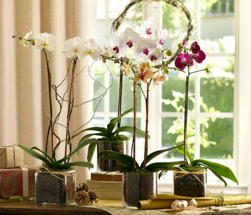 Картинки по запросу орхідеї в горщику подарунок