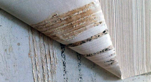 Оскільки грибок поширюється дуже швидко, то позбутися від нього без видалення шпалер можна лише на самих ранніх стадіях.