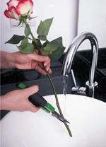 Стебла троянд необхідно зрізати під гострим кутом, у воді або під її струменем