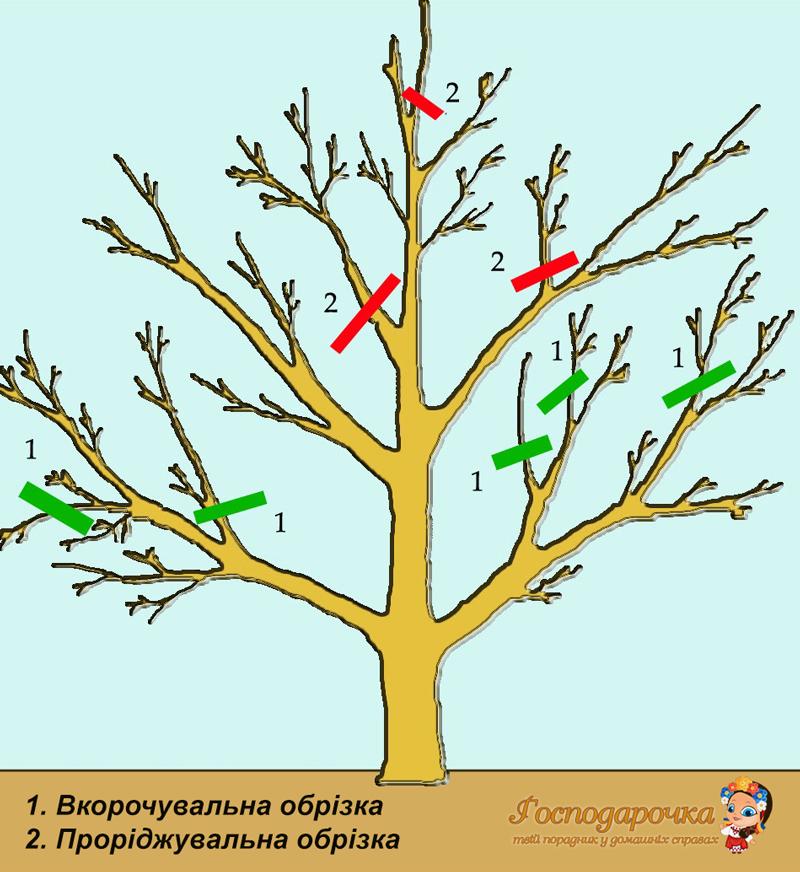 Найпопулярніші методи весняної обрізки дерев
