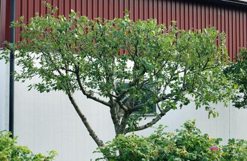 Так виглядає правильно сформоване дерево
