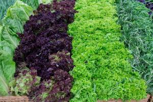 Як правильно садити зелень