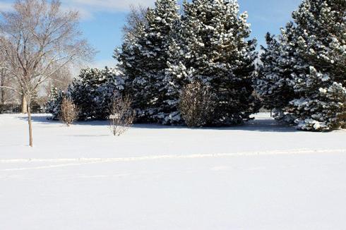 Головною умовою для чищення килима в снігу є чистий свіжий сніг у морозний день, щоб він був без крижаної кірки, пухкий та не мокрий