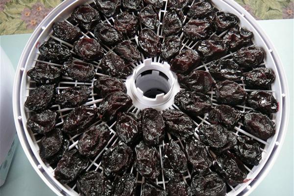 Для приготування чорносливу у електросушарці, сливи викладають на спеціальні піддони в один шар