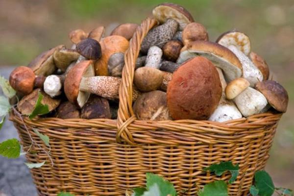 Більшість грибів не можна зберігати довше аніж 6 годин