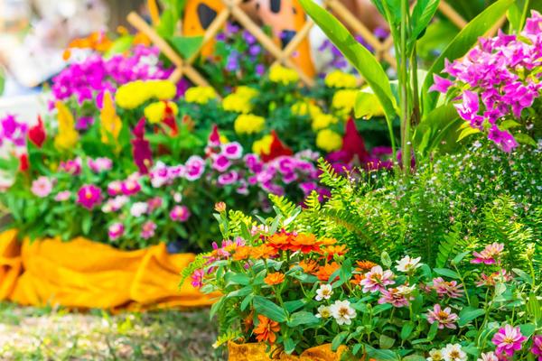 Рання весна завжди радує яскравими сходами зимуючих цибулинних культур: крокусів, мускарі, тюльпанів, нарцисів, пушкінії, луків, рябчиків, пролісків. Грядка з цими рослинами дуже швидко відцвітає, тому на зміну їм повинні бути посаджені спеціально підібрані для ледачого саду багаторічники:
