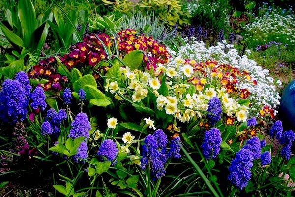 Не варто боятися і однорічних рослин. Однорічники відмінно підходять для так званої клумби малого догляду. Розмножуючись самосівом, вони щорічно відроджуються з насіння і не поступаються в красі квітам, вирощеним через розсаду.