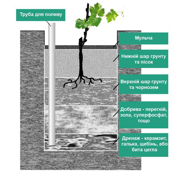 Схема підготовки посадкової ями під посадку винограду