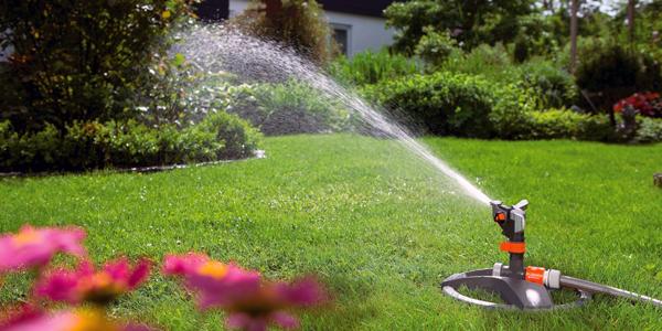 Якщо заморозки ще не настали, газон поливати потрібно не частіше двох разів на тиждень.
