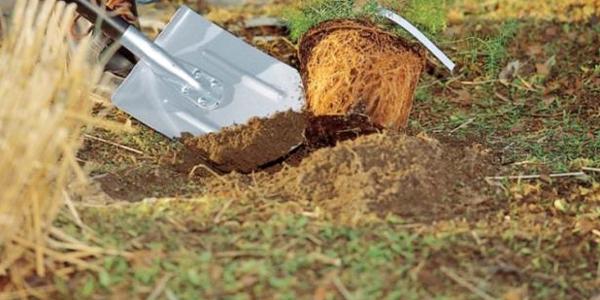 За весняно-літній період газон може природним шляхом втратити свій зовнішній вигляд, тому слід провести його ремонт
