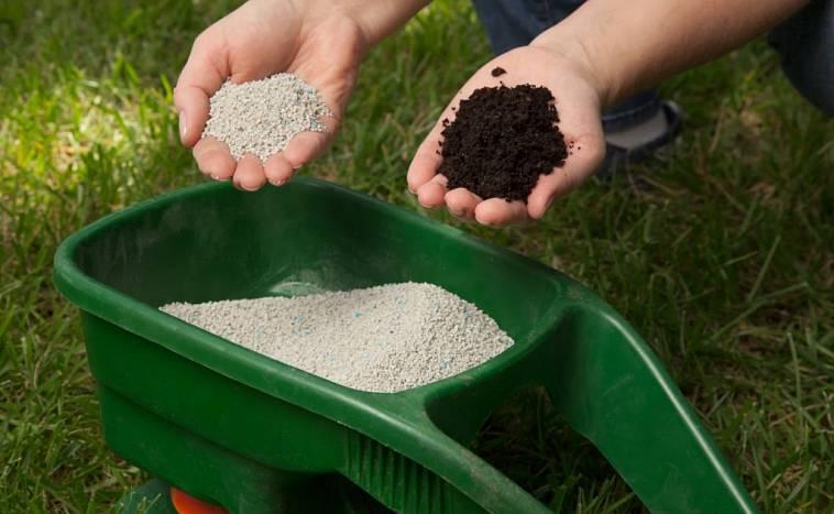 З метою підвищення родючості виснаженої за сезон землі, всю площу галявини можна вкрити на зиму шаром торфу, змішаного з сухим компостом.