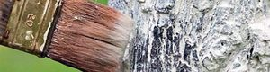 Весняна побілка дерев – від теорії до практики